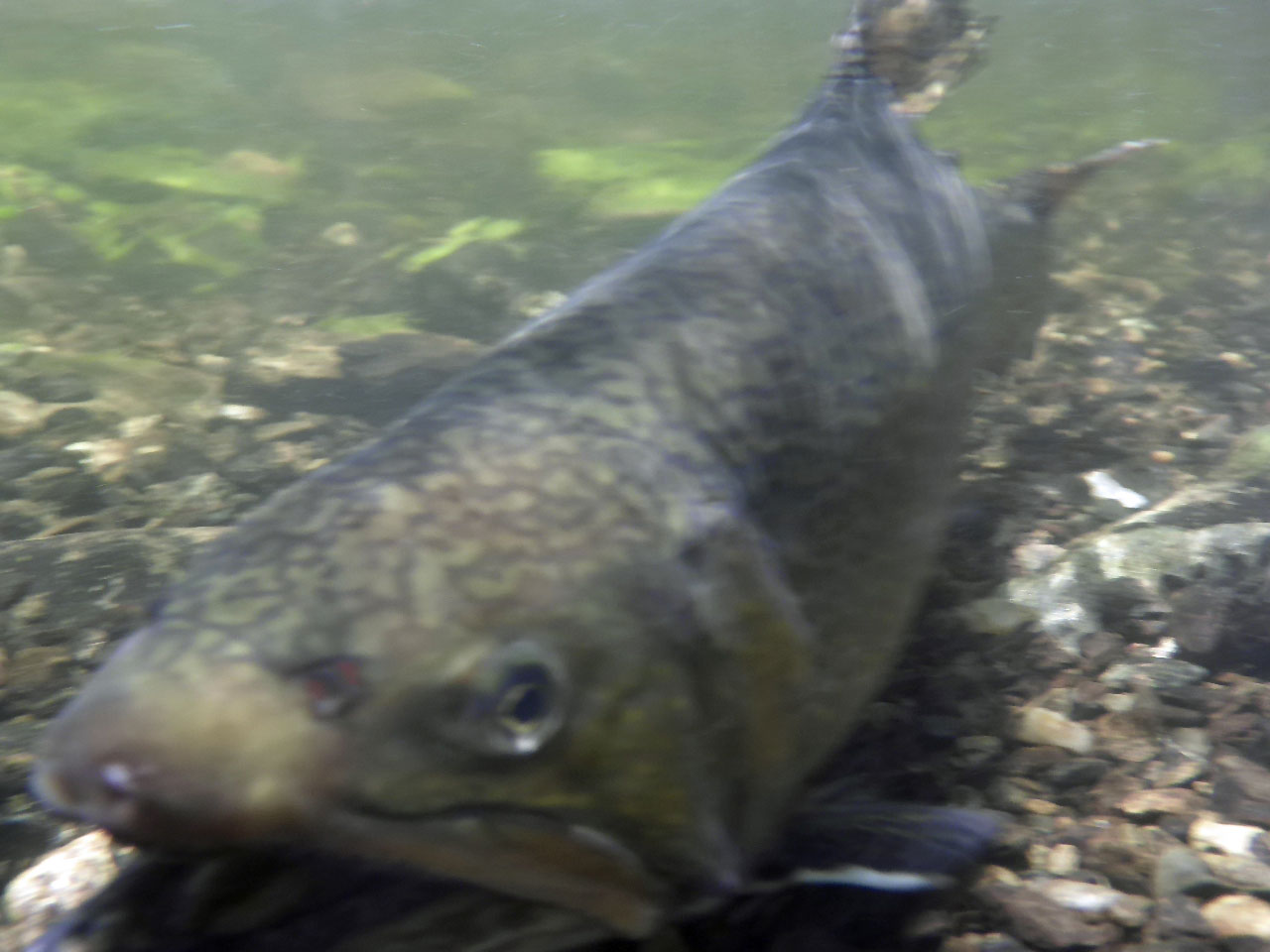 Images of the week june 30 2015 lopstick for Ct fishing season