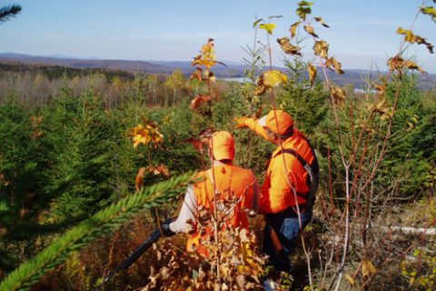 Best Bird Hunting Guides in NH